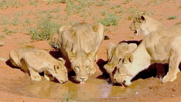 watch  u0026quot more tales of the desert u0026quot  full documentary online