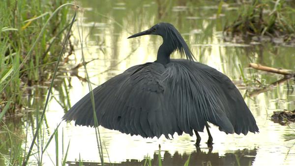 watch  u0026quot umbrella bird u0026quot  full documentary online