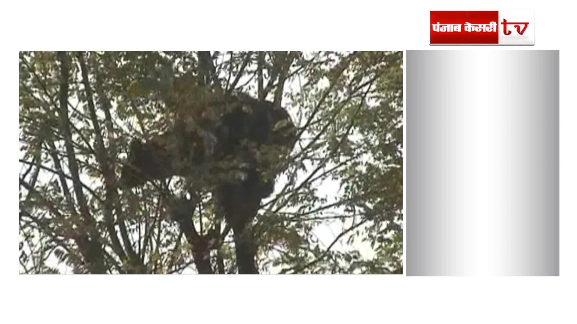 Image of  रीछ ने दो लोगों पर किया हमला, 1 घायल