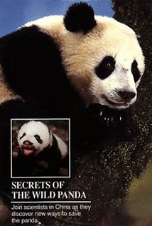 Image of Young Explorers: Secrets of the Wild Panda